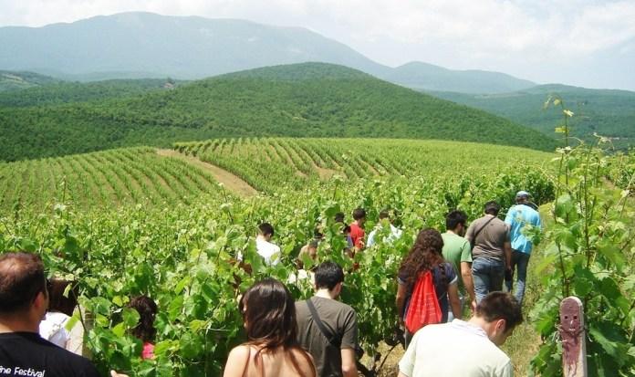 Δρόμοι-του-Κρασιού-της-Βορείου-Ελλάδος